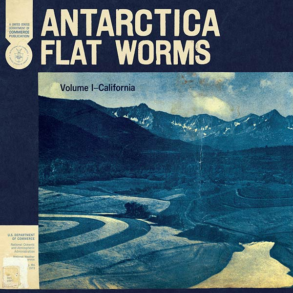 flat worms antarctica 2020